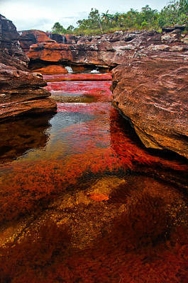 Designs Similar to Cano Cristales by Jess Kraft