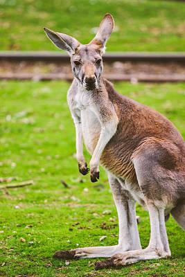 Designs Similar to Cute Kangaroo Portrait