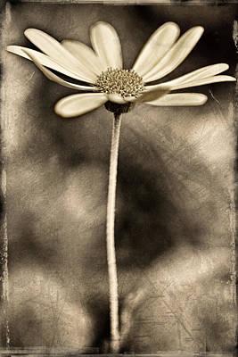 Polaroid Transfer Photographs