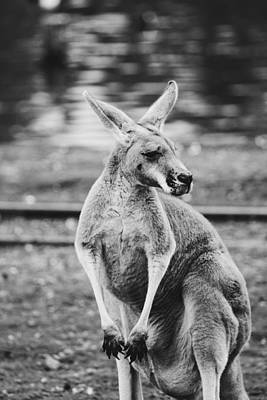Designs Similar to Kangaroo Portrait