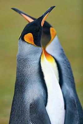 Designs Similar to King Penguin by Joan Gil Raga