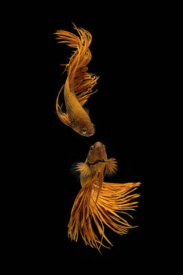 Designs Similar to Love Story Of The Golden Fish