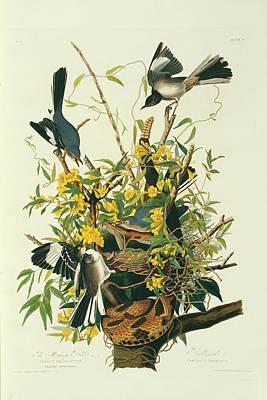 Designs Similar to Northern Mockingbirds