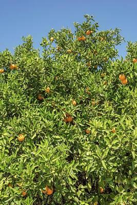 Designs Similar to Orange Tree