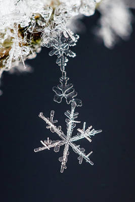 Snow Flake Photographs