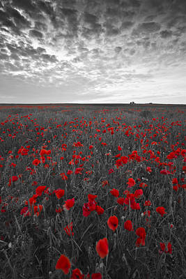 Designs Similar to Poppy Field by Graham Custance
