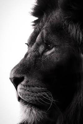 Designs Similar to Portrait Of A Lion
