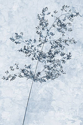 Pressed Flowers Art