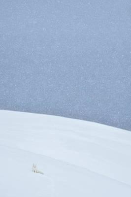Designs Similar to Snowy Arctic Fox In Svalbard