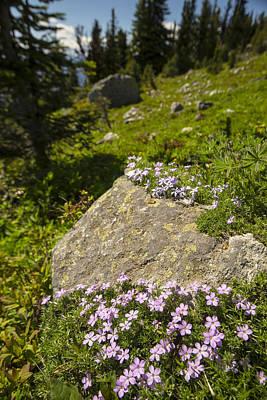 Designs Similar to Stone Garnish And Trail Glitter