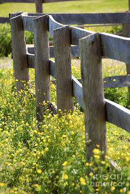 Designs Similar to Summer Meadow
