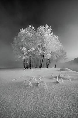 Designs Similar to The First Snow