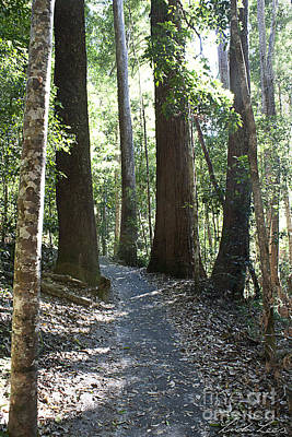 Queensland Kauri Pines Photographs