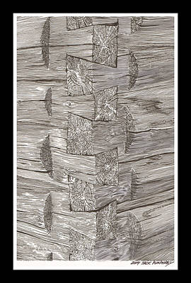 Old Growth Drawings Prints