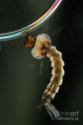 Designs Similar to Mosquito Larva 3 by Ted Kinsman