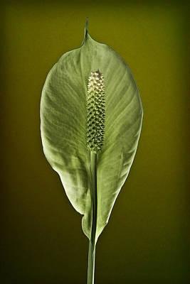 Ron Morecraft: Floral Art
