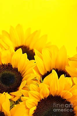 Designs Similar to Sunflowers by Elena Elisseeva