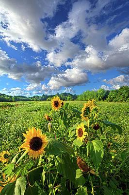 Designs Similar to Autumn Is Near by Phil Koch