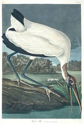 Designs Similar to Wood Ibis by John James Audubon