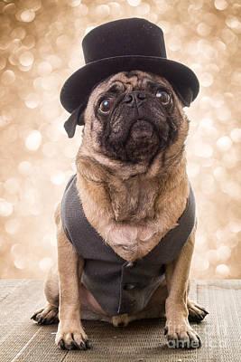Pug Originals