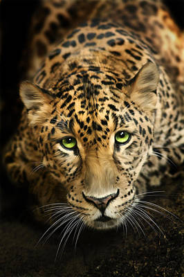Golden Leopard Digital Art