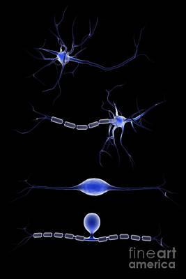 Neuroscience Digital Art