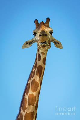 Designs Similar to Hello Giraffe by Inge Johnsson
