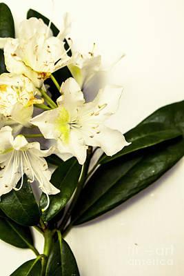 Designs Similar to Japanese Flower Art