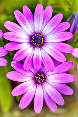 Designs Similar to Purple Flowers by Az Jackson