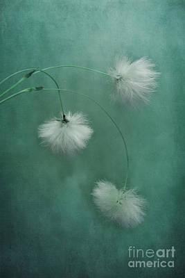 Seedhead Art