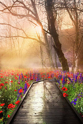 Designs Similar to Sunlit Wildflowers