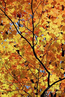Designs Similar to Sunshine In Maple Tree