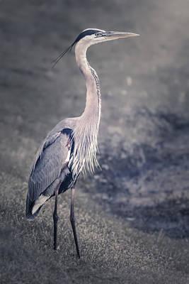 Heron Digital Art Original Artwork