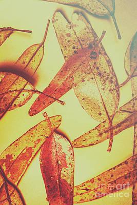 Autumnal Art Prints