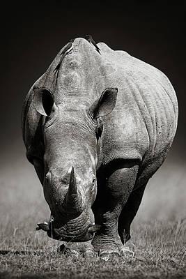 Designs Similar to White Rhinoceros  In Due-tone