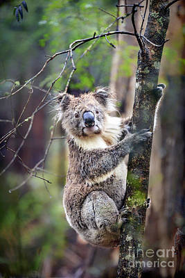 Australian Animal Photographs