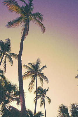 Designs Similar to Evening Palms by Emily Navas