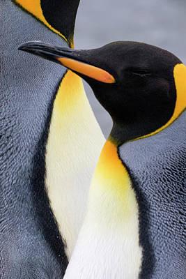 Designs Similar to King Penguin Close-up Showing