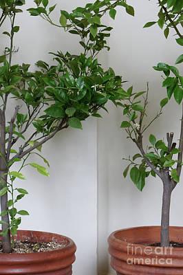 Designs Similar to Young Orange Trees