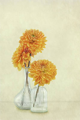Designs Similar to 3 Dahlias by Gaille Gray