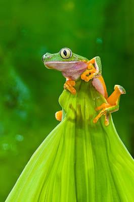 Designs Similar to Monkey Treefrog