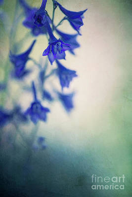 Designs Similar to A Detail Of A Wild Delphinium