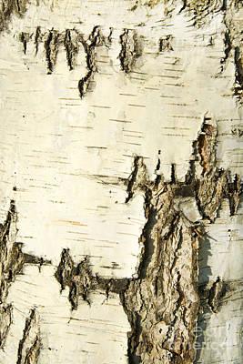 Designs Similar to Birch Bark by Aigul Minnibaeva