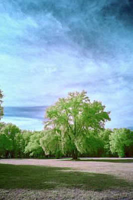 Designs Similar to Central Florida Tree