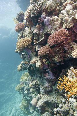 Designs Similar to Coral Reef