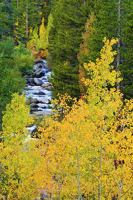 Designs Similar to Fall Color Along The South Fork