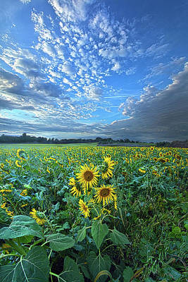 Designs Similar to Flowers Of The Sun by Phil Koch