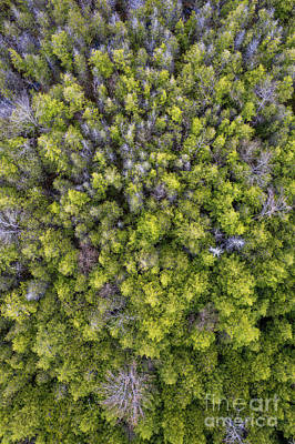 Designs Similar to Grove Of Pines Aerial