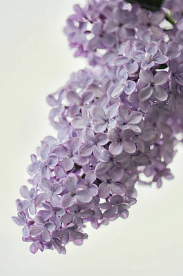 Designs Similar to Lavender Lilac In Bloom
