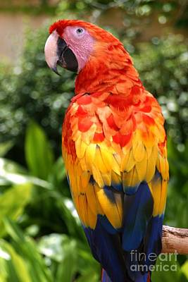 Designs Similar to Macaw Sitting On A Branch